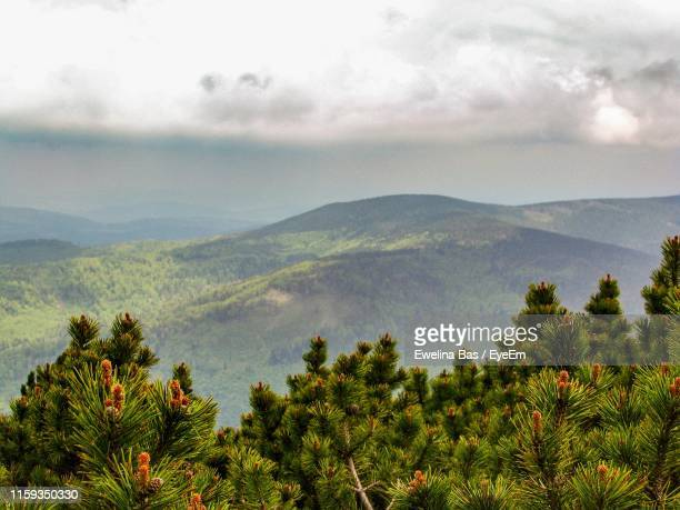 scenic view of mountains against sky - babia góra mountain stock pictures, royalty-free photos & images