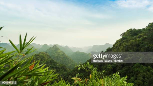 scenic view of mountains against sky - rainforest stock pictures, royalty-free photos & images