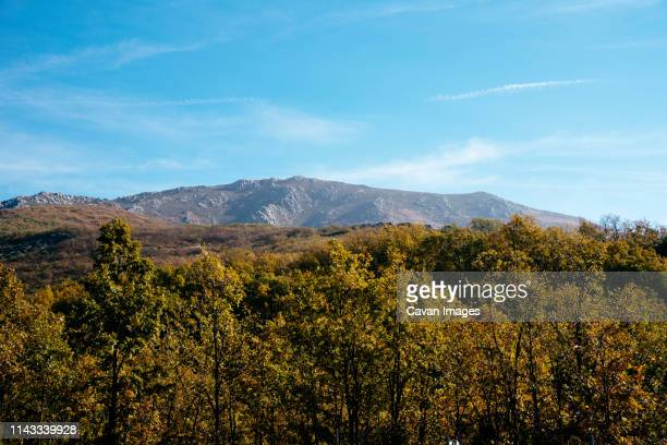 scenic view of mountains and trees in forest against sky - segovia stock pictures, royalty-free photos & images
