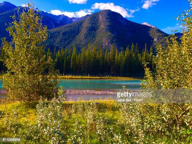 scenic view of mountains and trees - josie photos et images de collection