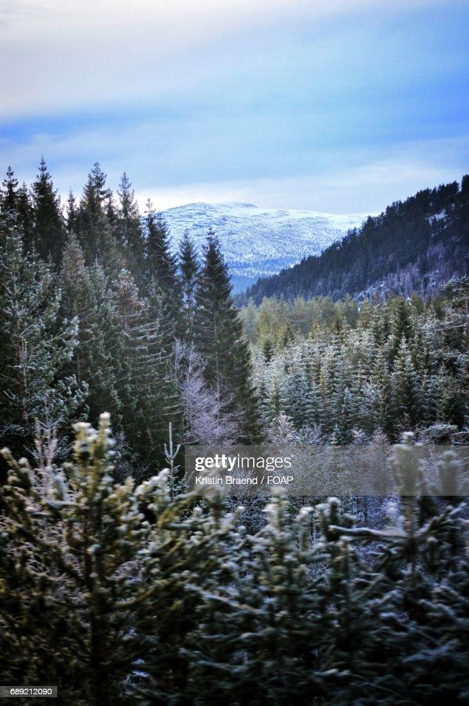 Scenic view of nature : Foto de stock