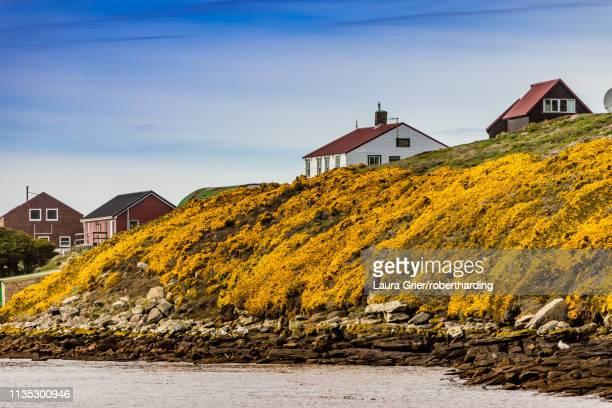 scenic view of new island in the falkland islands, south america - falklandinseln stock-fotos und bilder