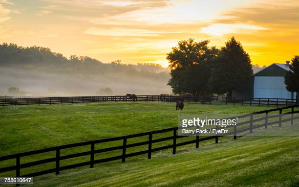 scenic view of paddock against sky during sunset - pasture stock pictures, royalty-free photos & images