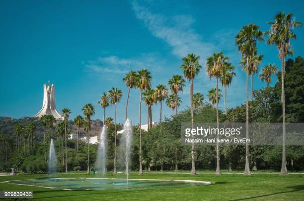scenic view of palm trees against blue sky - algiers algeria stock pictures, royalty-free photos & images