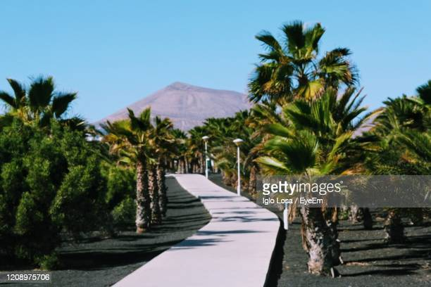 scenic view of palm trees against clear sky - puerto del carmen stock pictures, royalty-free photos & images
