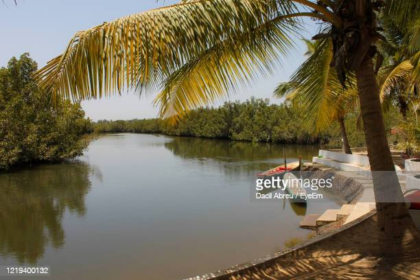 scenic view of palm trees against sky - banjul stock pictures, royalty-free photos & images