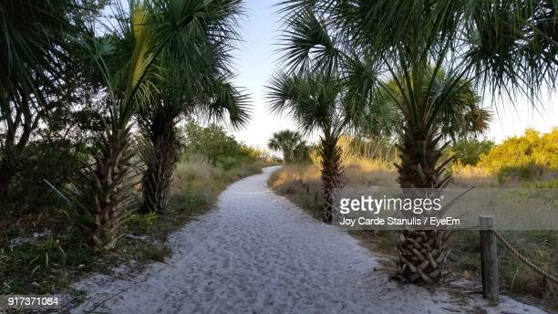 scenic view of palm trees against sky - siesta key bildbanksfoton och bilder