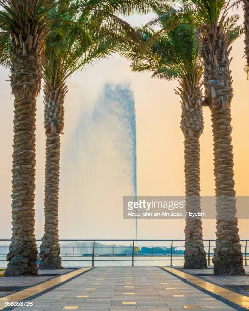 scenic view of palm trees against sky - jiddah stock pictures, royalty-free photos & images