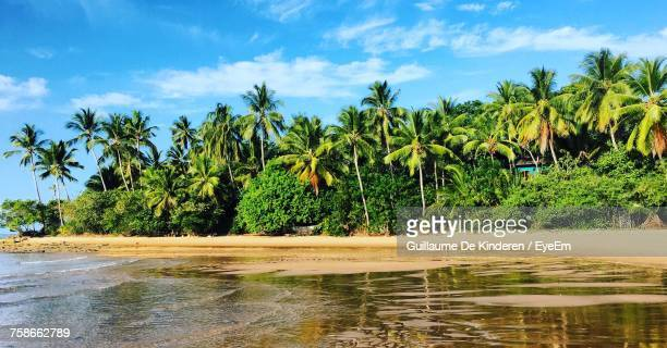 Scenic View Of Palm Trees At Beach Against Sky