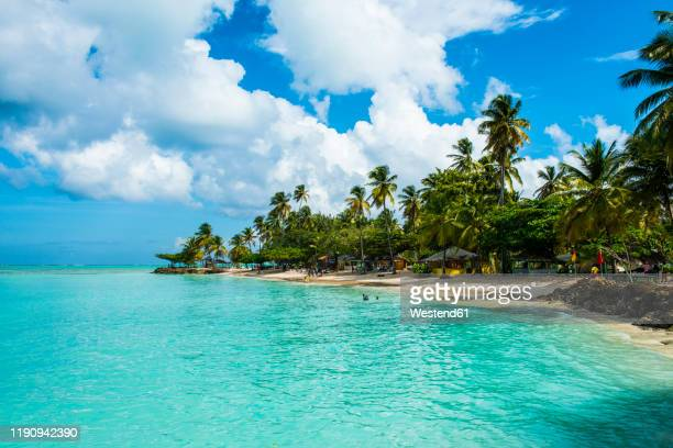 scenic view of palm trees at pigeon point beach against cloudy sky, trinidad and tobago, caribbean - trinidad and tobago stock pictures, royalty-free photos & images