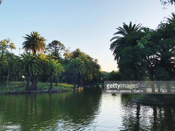 scenic view of palm trees by lake against sky - uruguay stock-fotos und bilder