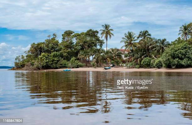 scenic view of palm trees by lake against sky - guyana fotografías e imágenes de stock
