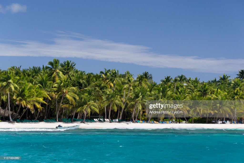 Scenic View Of Palm Trees By Sea Against Sky : Foto stock
