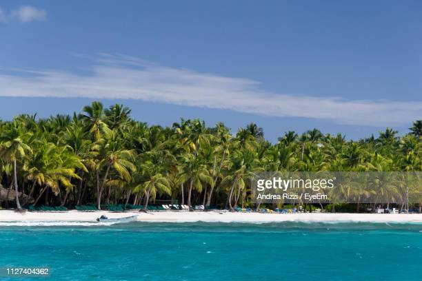 scenic view of palm trees by sea against sky - andrea rizzi foto e immagini stock