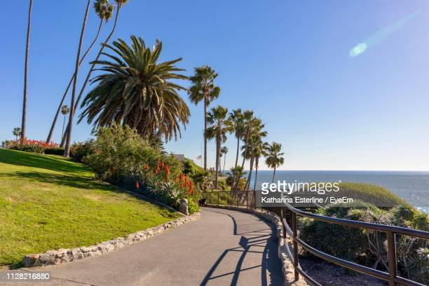 scenic view of palm trees by sea against sky - laguna beach california stock pictures, royalty-free photos & images