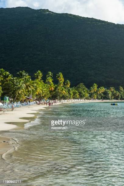 scenic view of palm trees growing at beach against mountain, tortola, british virgin islands - cane garden bay stock pictures, royalty-free photos & images