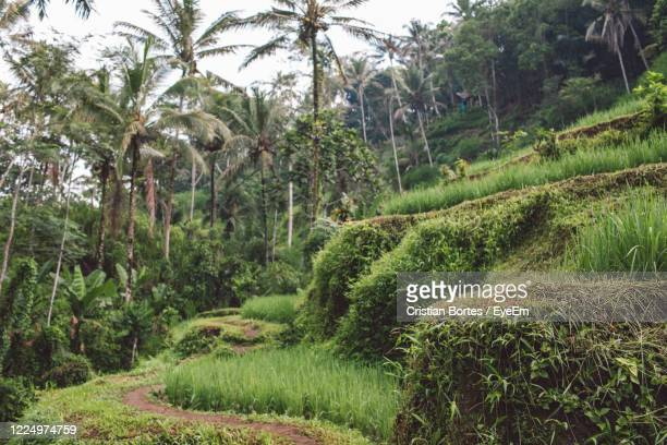 scenic view of palm trees in forest - bortes stock pictures, royalty-free photos & images
