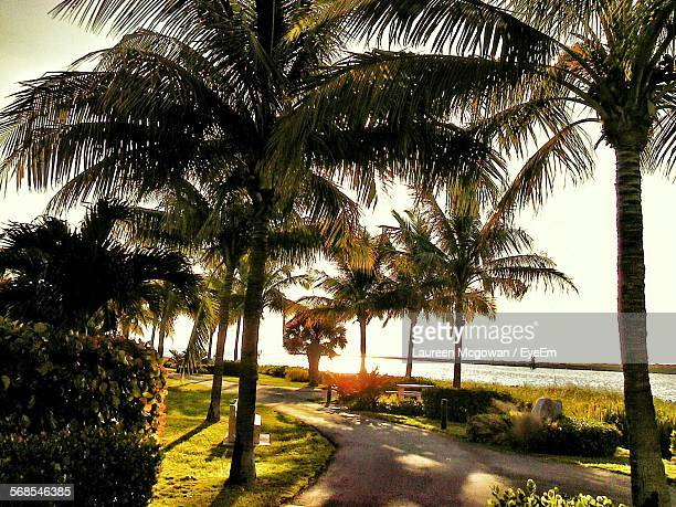 Scenic View Of Palm Trees In Park By Lake