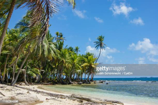 scenic view of palm trees on beach against sky - panama city beach stock pictures, royalty-free photos & images