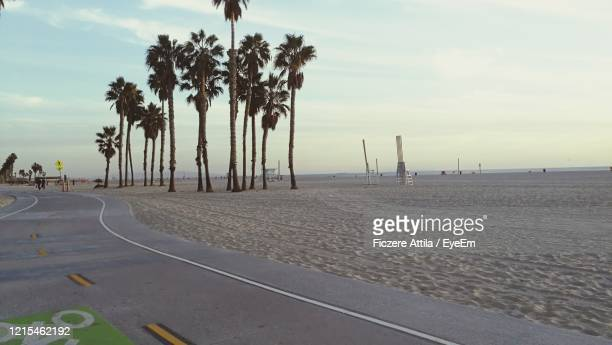 scenic view of palm trees on beach against sky - santa monica stock-fotos und bilder