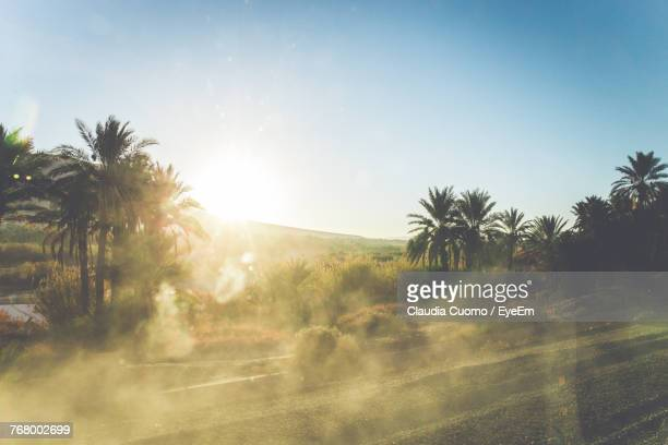 scenic view of palm trees on field against clear sky during foggy weather - cuomo stock pictures, royalty-free photos & images