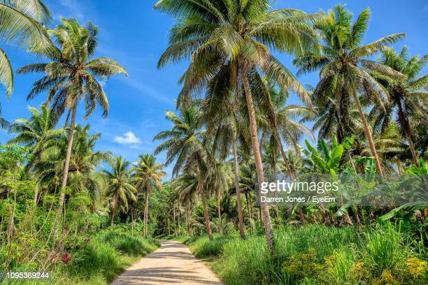 scenic view of palm trees on field against sky - cocotier photos et images de collection