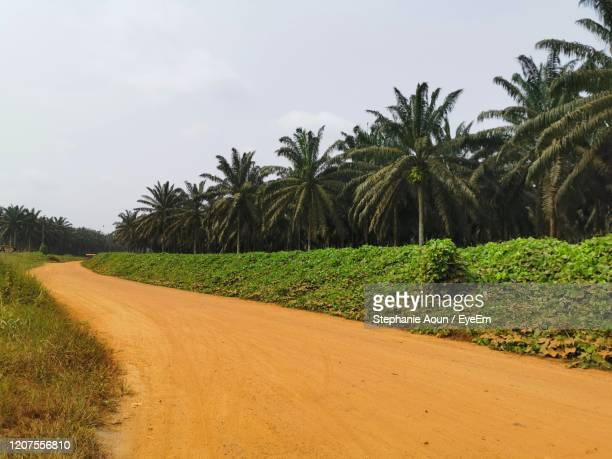 scenic view of palm trees on field against sky - cameroon stock pictures, royalty-free photos & images