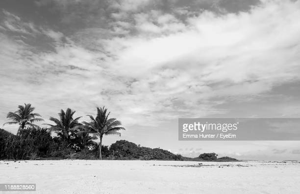 scenic view of palm trees on land against sky - emma hunter eye em stock photos and pictures