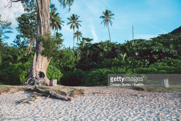 scenic view of palm trees on land against sky - bortes foto e immagini stock