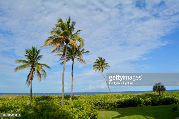 scenic view of palm trees on landscape against sky - fort lauderdale stock pictures, royalty-free photos & images