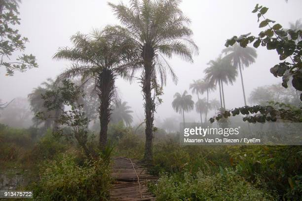 Scenic View Of Palm Trees On Landscape Against Sky