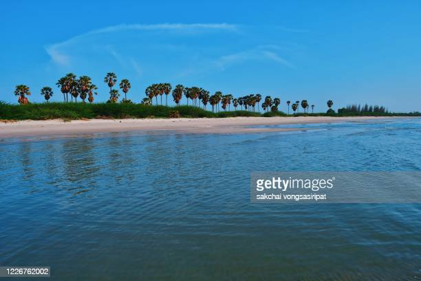 scenic view of palm trees on the beach against sky - 2020 2029 stock pictures, royalty-free photos & images