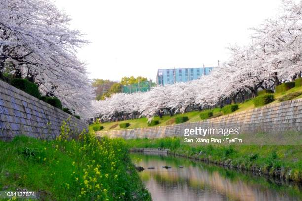 scenic view of park by trees against sky - nagoya stock pictures, royalty-free photos & images