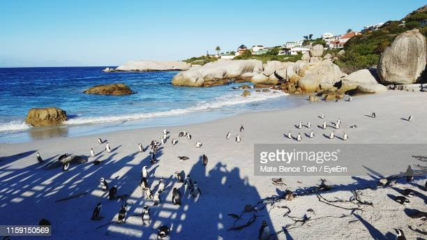 scenic view of penguins on beach against clear sky - constantia stock pictures, royalty-free photos & images