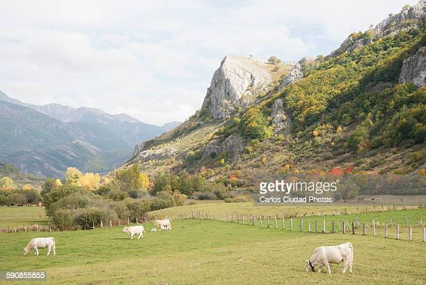Scenic view of Picos de Europa in autumn