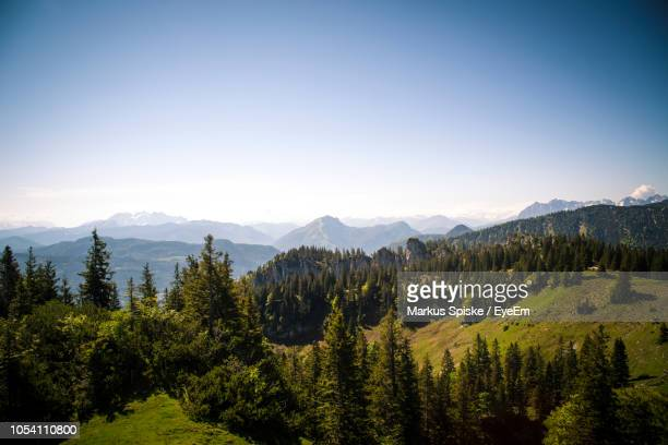 scenic view of pine trees against sky - pinaceae stock pictures, royalty-free photos & images