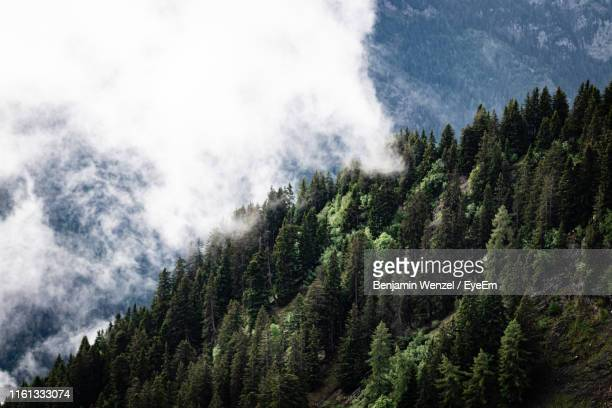 scenic view of pine trees against sky - bad ragaz stock pictures, royalty-free photos & images