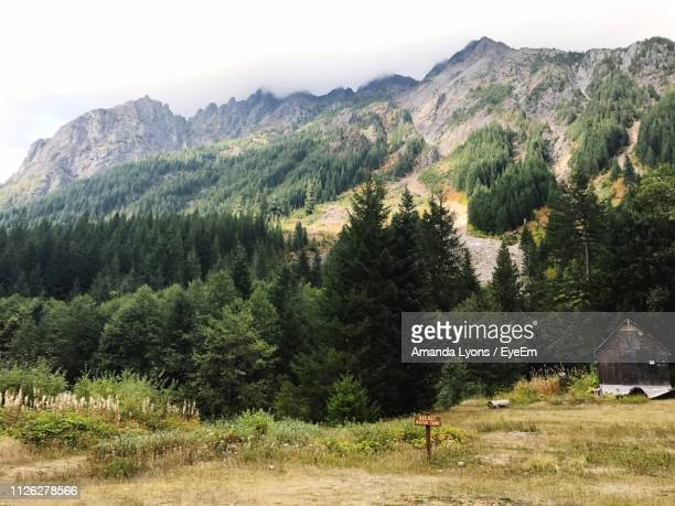scenic view of pine trees and mountains against sky - amanda and amanda stock pictures, royalty-free photos & images
