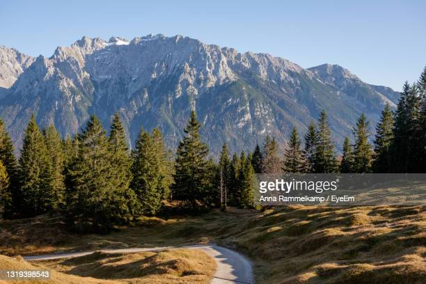 scenic view of pine trees by mountains against clear sky - mittenwald fotografías e imágenes de stock
