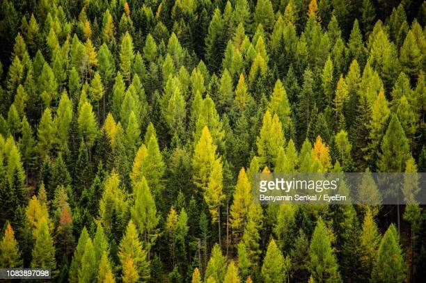 scenic view of pine trees in forest against sky - autriche photos et images de collection