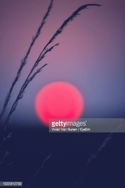 scenic view of pink sky during sunset - pink moon stock pictures, royalty-free photos & images