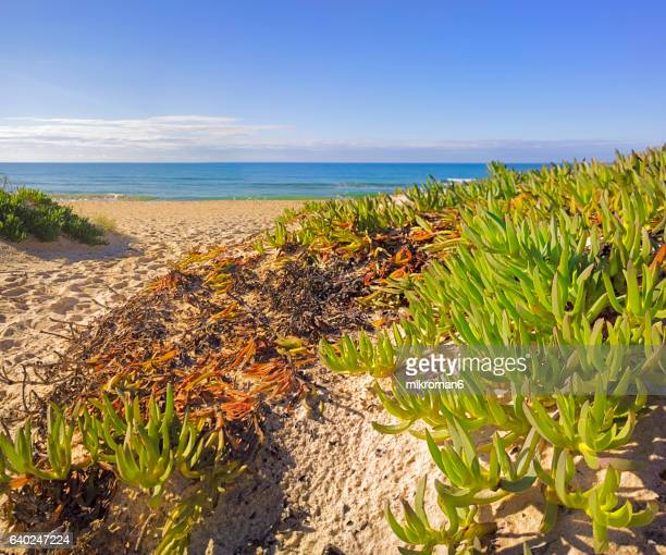 scenic view of plant growing on beach - praia de faro, faro, portugal - faro city portugal stock photos and pictures