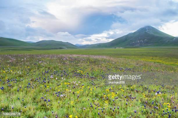 scenic view of plateau of campo imperatore - gran sasso, abruzzo, italy - アブルッツォ国立公園 ストックフォトと画像