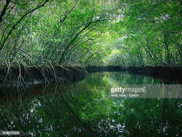 Scenic View Of Pond Amidst Trees At Everglades National Park