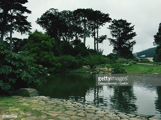 Scenic View Of Pond And Trees At Golden Gate Park
