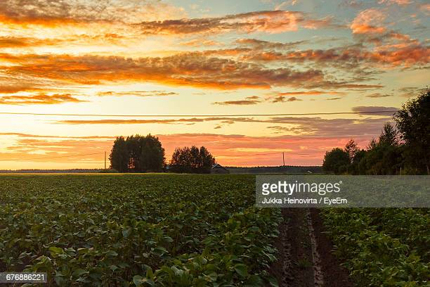 scenic view of potato field against sky during sunset - heinovirta stock pictures, royalty-free photos & images