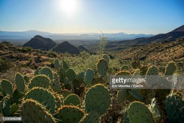 scenic view of prickly pear cactus and mountains against sky - scottsdale arizona stockfoto's en -beelden