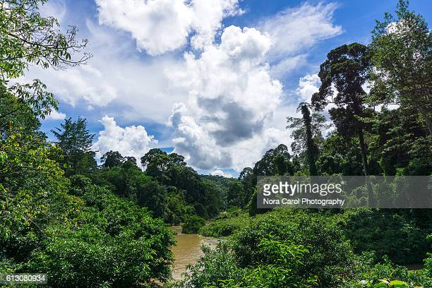 scenic view of primary rain forest in borneo - dipterocarp tree stock pictures, royalty-free photos & images