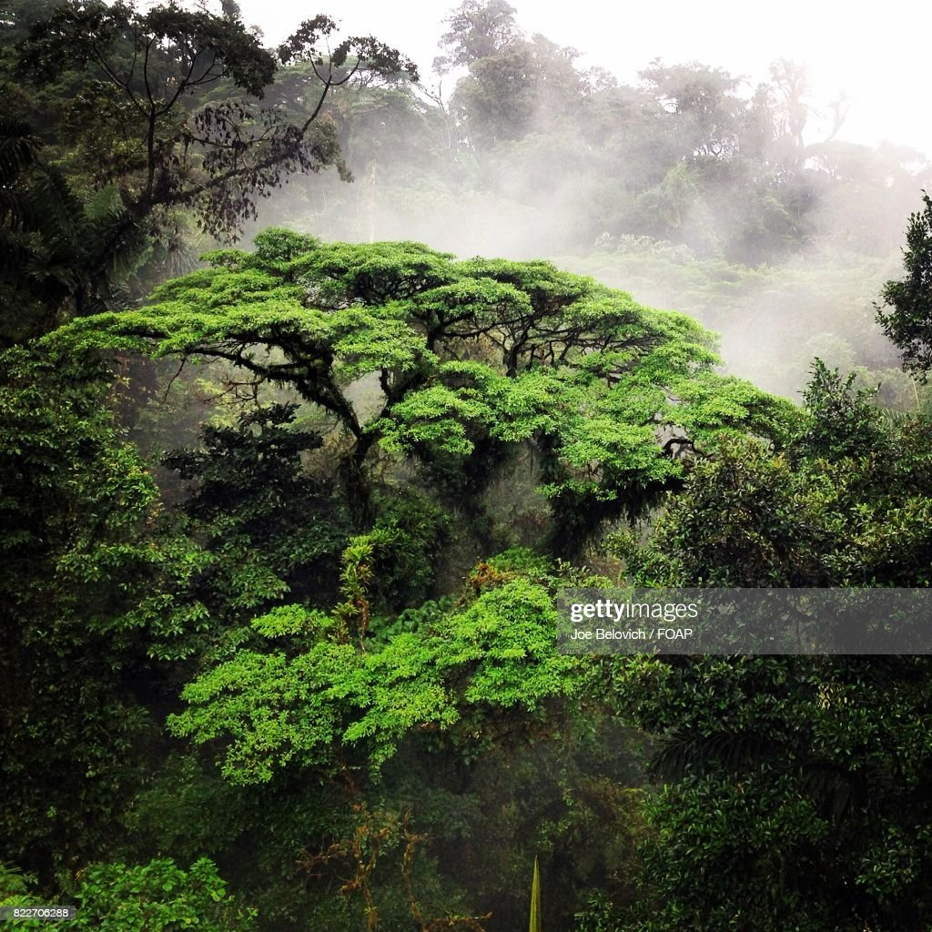Scenic view of rain forest : Stock Photo