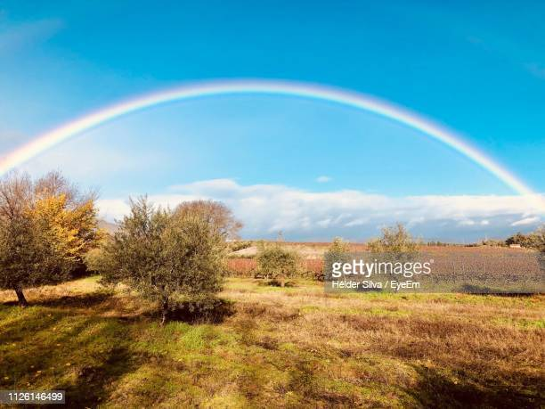 scenic view of rainbow over trees on field against sky - rainbow sky stock pictures, royalty-free photos & images